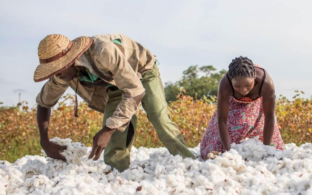 La Sodeco récompense les meilleurs producteurs du coton